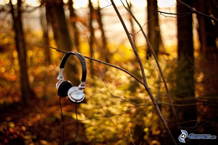 hörlurar, grenar, skog