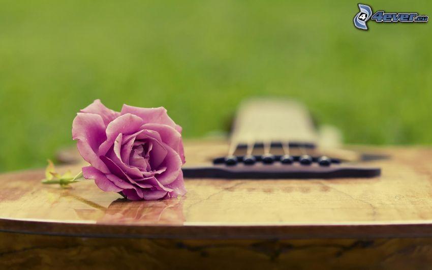 lila ros, gitarr