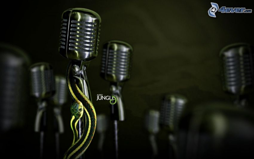 mikrofon, orm