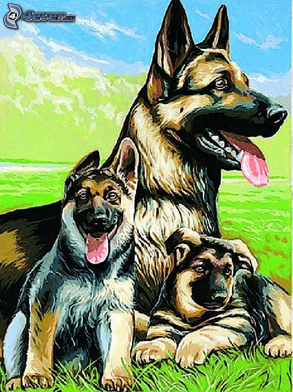 schäferfamilj, bild, hundar