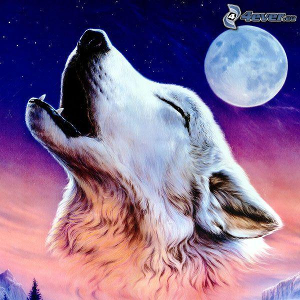varg ylar, fullmåne