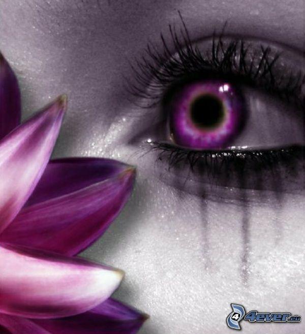 lila öga, blomma, ögonfransar