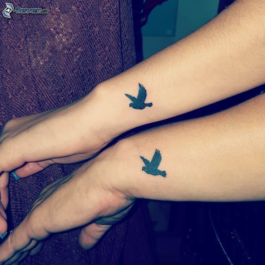 tatuering, fåglar