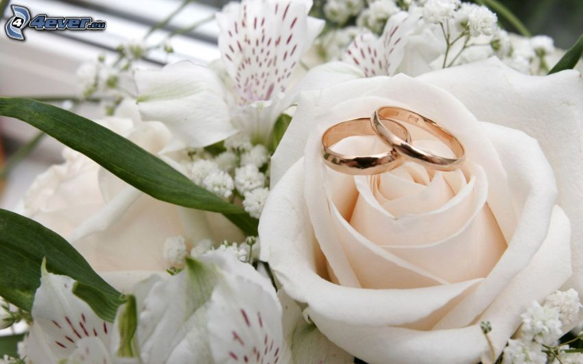 vigselringar, vit ros, vita blommor