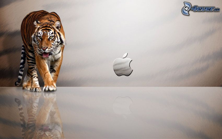 tiger, Apple