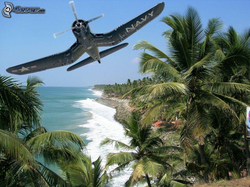 flygplan, palmer, hav
