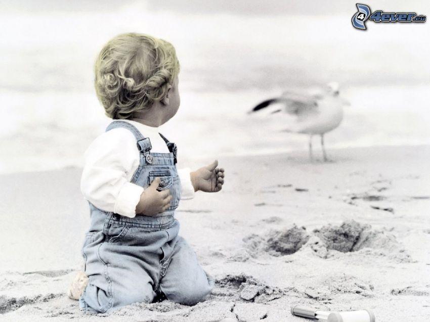 bebis, sandstrand, mås