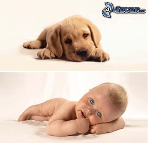 hund som liknar matte, blåögt barn