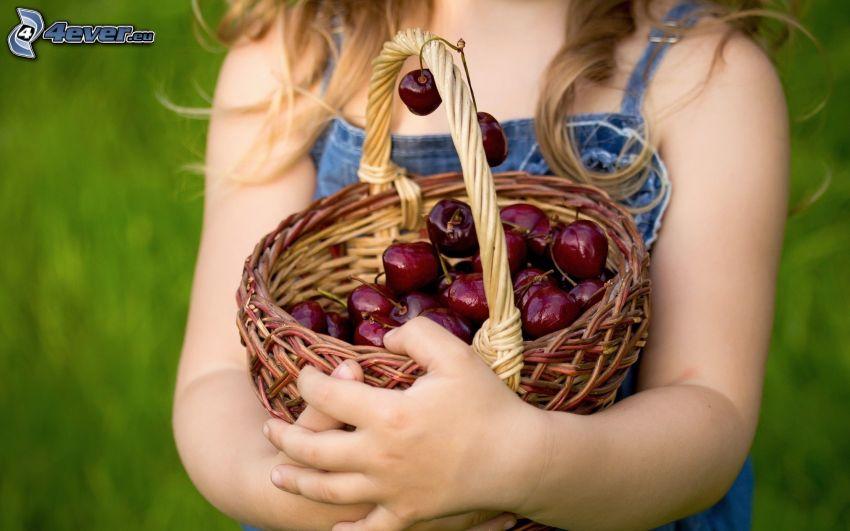 körsbär, korg, flicka, händer