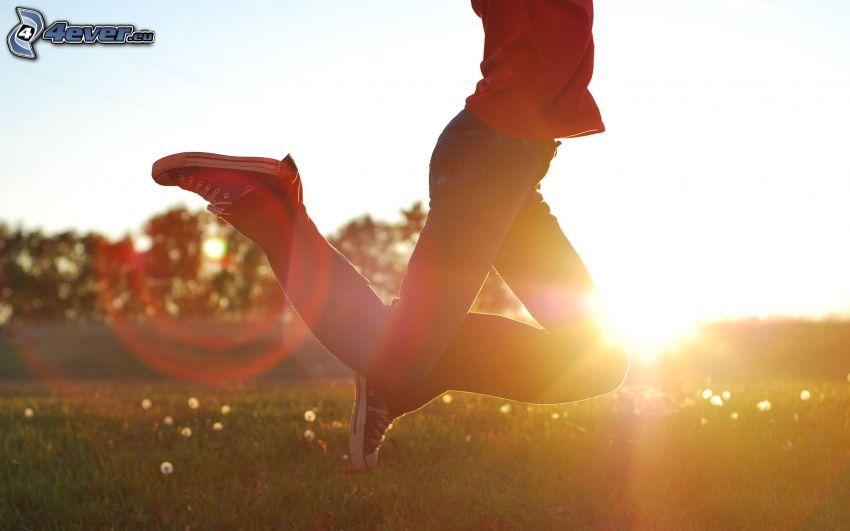 hopp, flickben, solnedgång över äng
