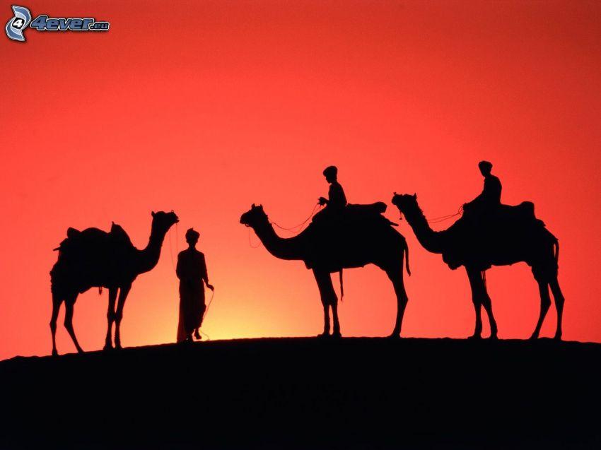 kameler, silhuetter av människor, solnedgång, röd himmel