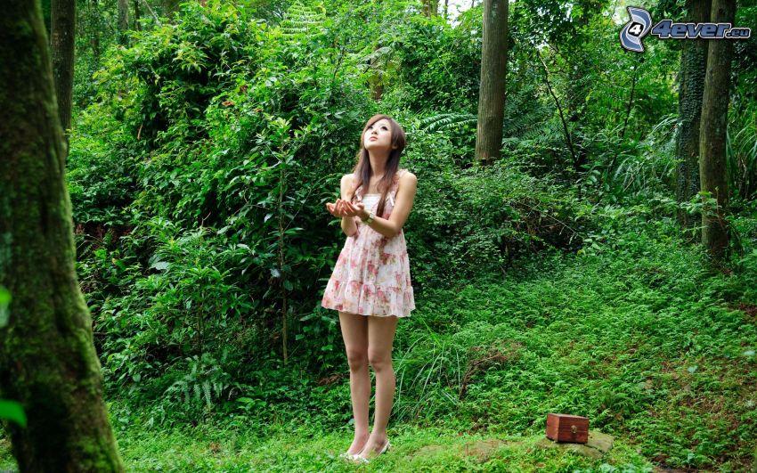 asiat, skog