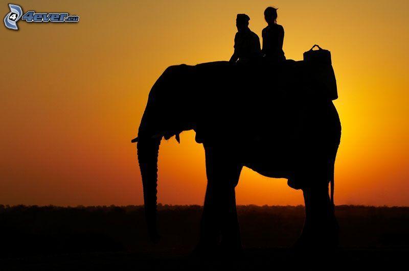 resa på elefant, orange solnedgång