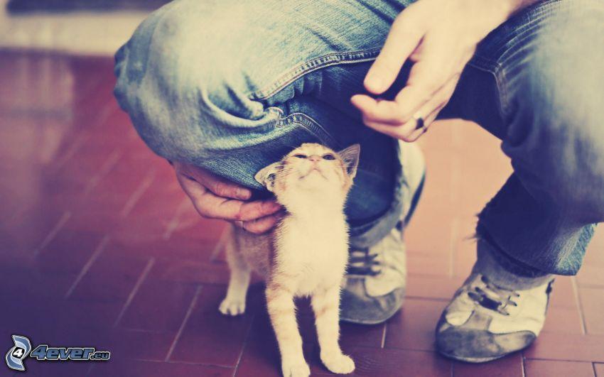 liten kattunge, ben