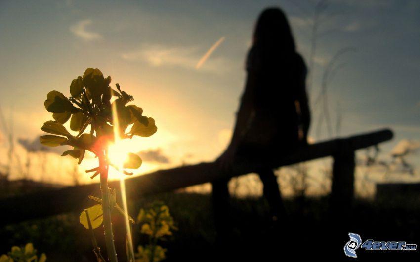 silhuett av flicka, solnedgång bakom bänk, växt