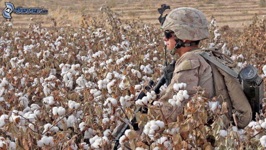 soldat, bomull, åker