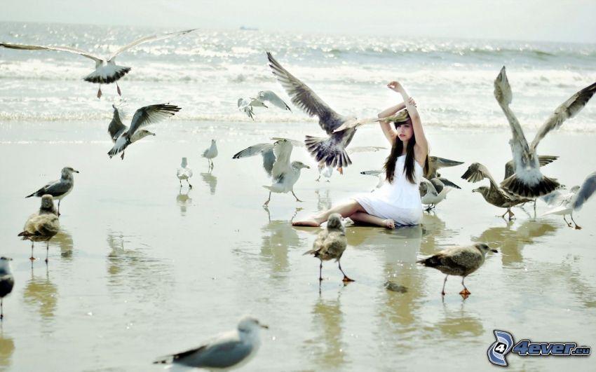 tjej, vit klänning, måsar, hav