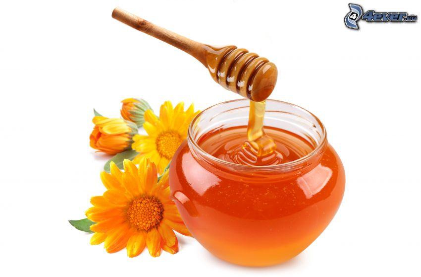 honung, gula blommor