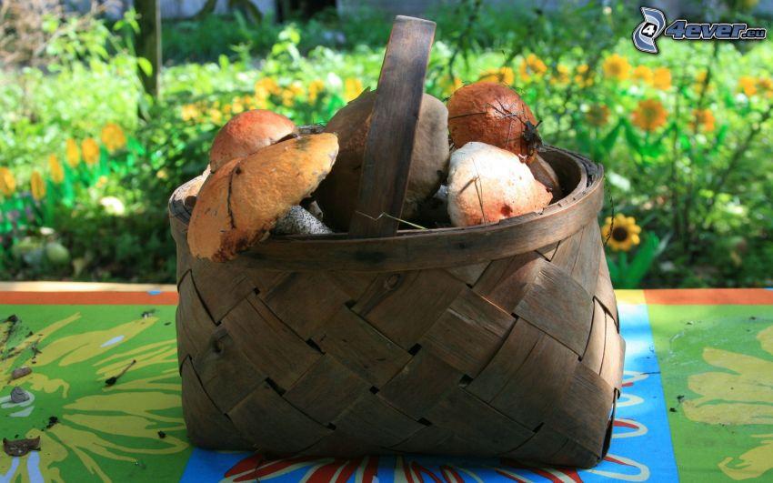 svampar