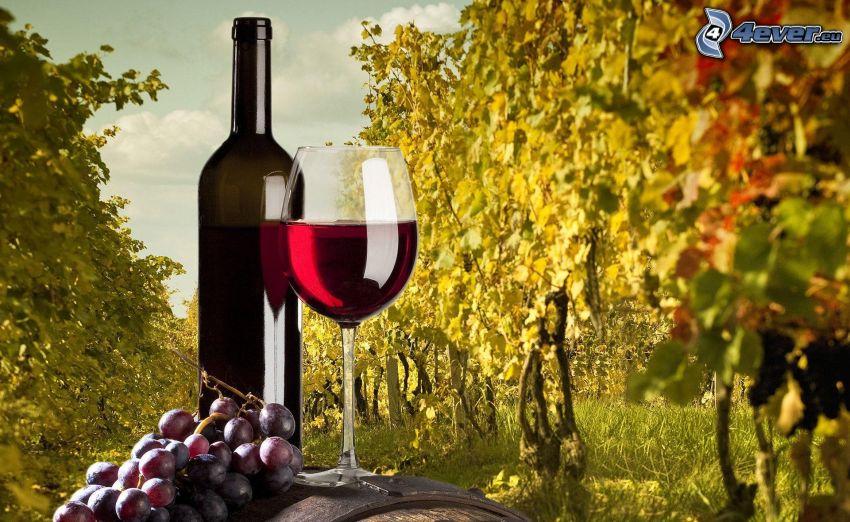 vin, flaska, glas, vindruvor, vingård