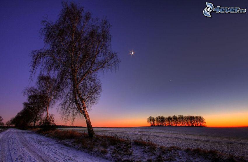 åker, lund, träd, efter solnedgången, kväll, måne, snö