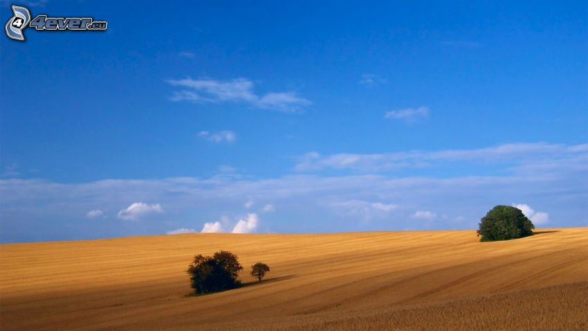 åker, träd, himmel