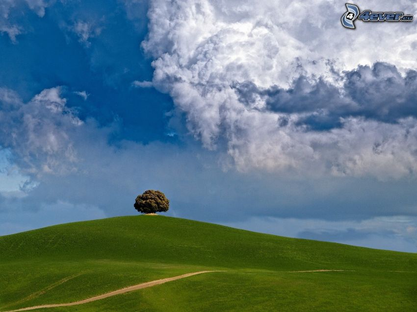 äng, ensamt träd, fältstig, moln
