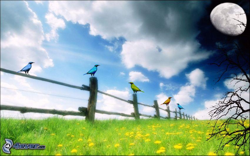 äng, fåglar, trästaket, moln, himmel, måne