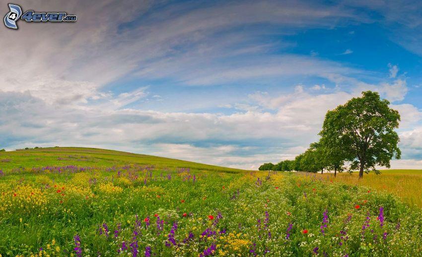 äng, färgglada blommor, träd