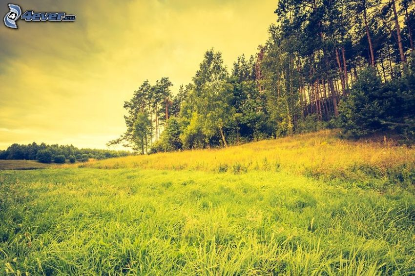 äng, skog, gul himmel