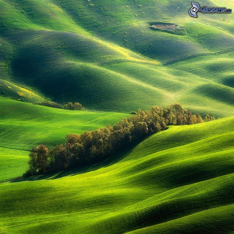 ängar, kullar, grönska, träd