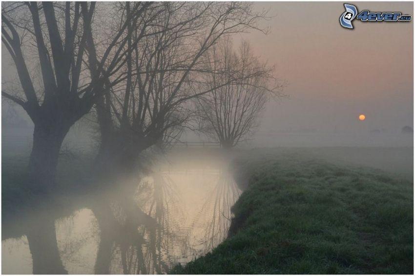 bäck, dimma, solnedgång