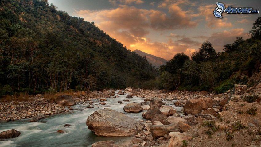 bäck, klippor, skog, kväll