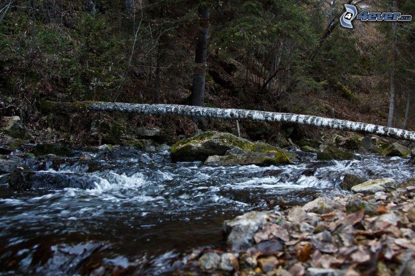 bäck, skog, klippor