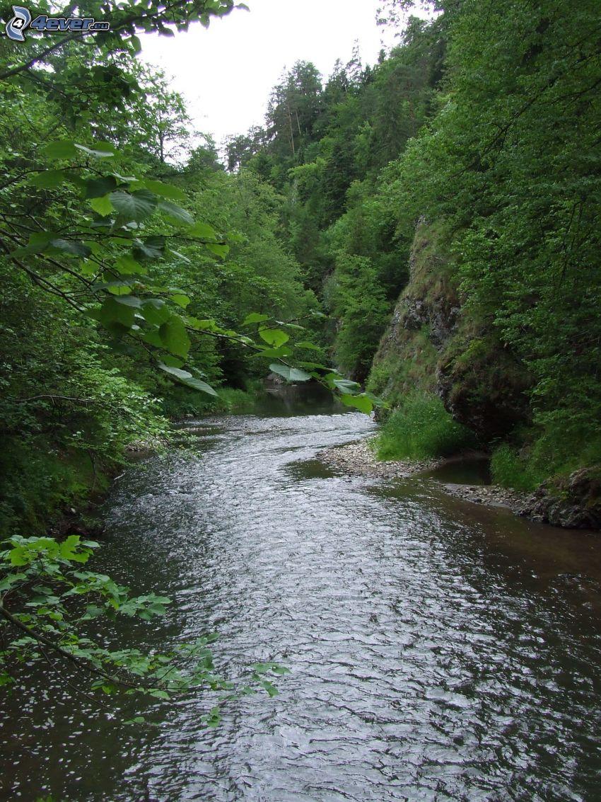 bäck, skog