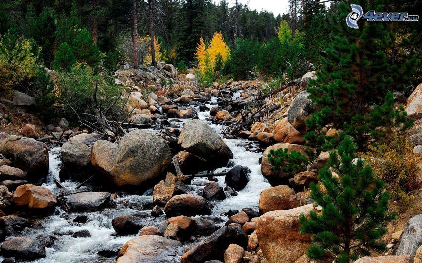 bäck, stenar, barrskog
