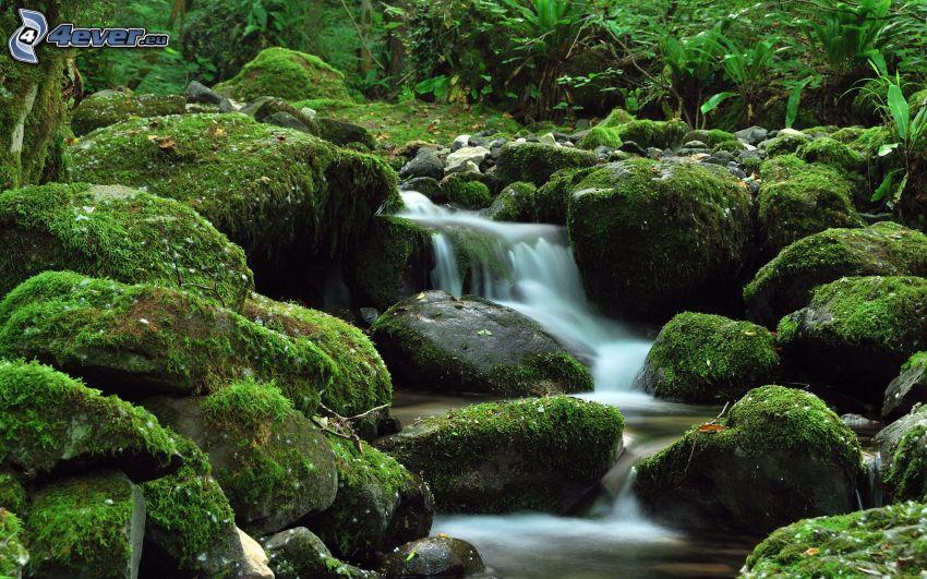 bäck, stenar, mossa, grönska