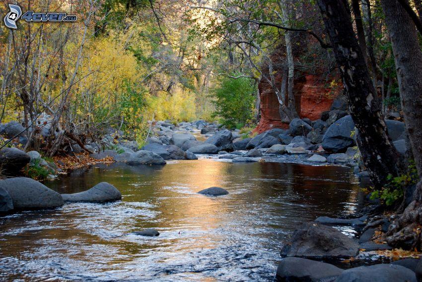 bäck, stenar, skog