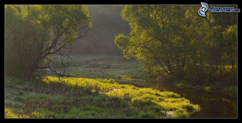 bäck, träd, gräs