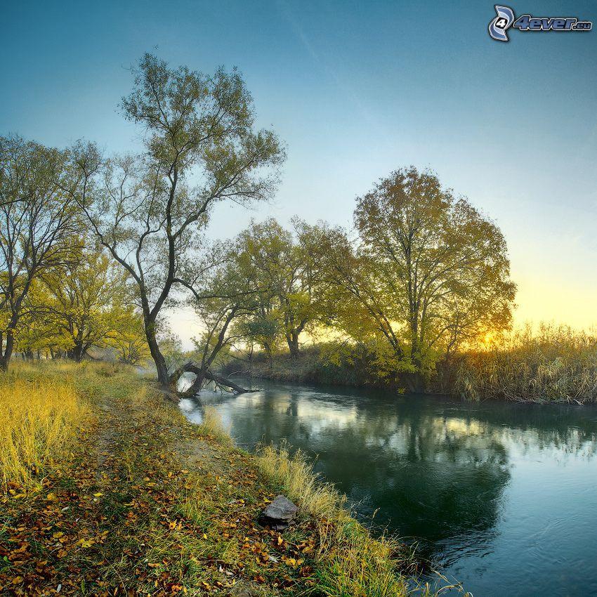 bäck, träd, solnedgång