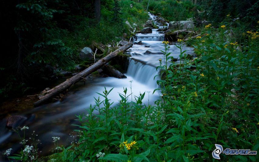 bäck, vattenfall, växter