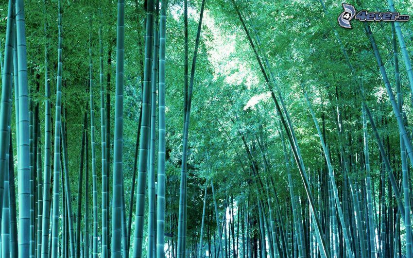 bambuskog