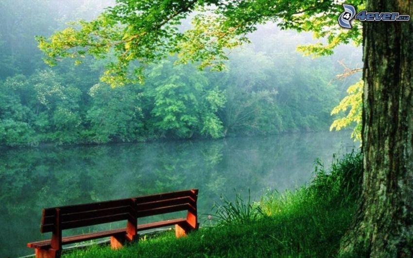 bänk, flod, skog, träd