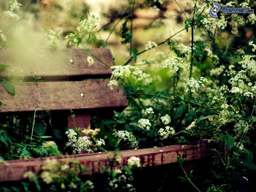 bänk, vita blommor