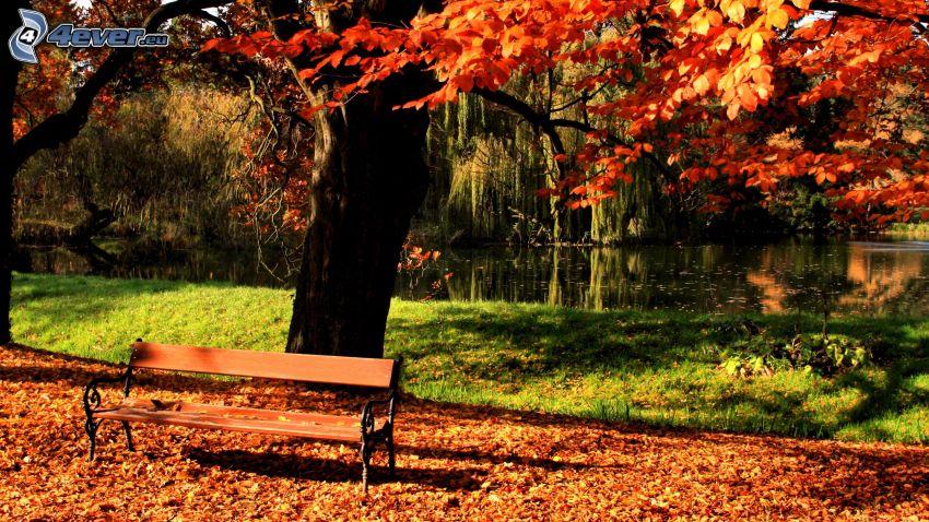 bänk i park, färggrannt träd, nedfallna löv, sjö