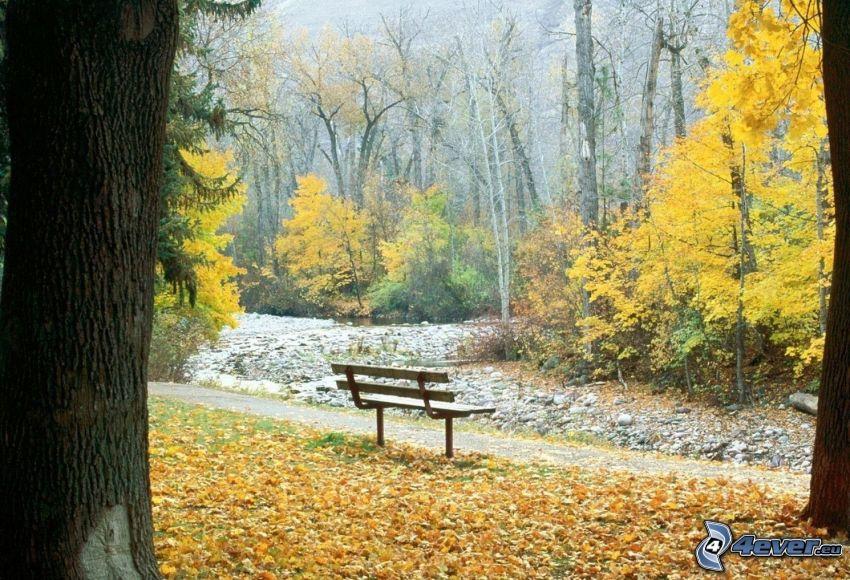 bänk i park, gula träd, nedfallna löv