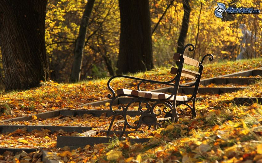 bänk i park, trappor, gula löv