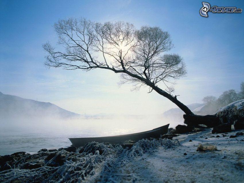 båt vid strand, träd, snö, markdimma