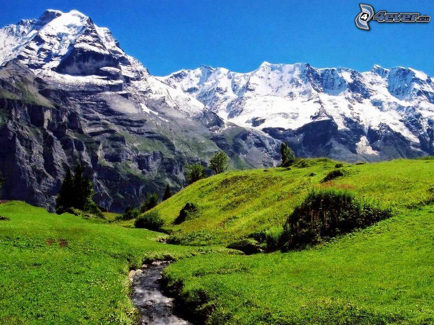 Alperna, äng