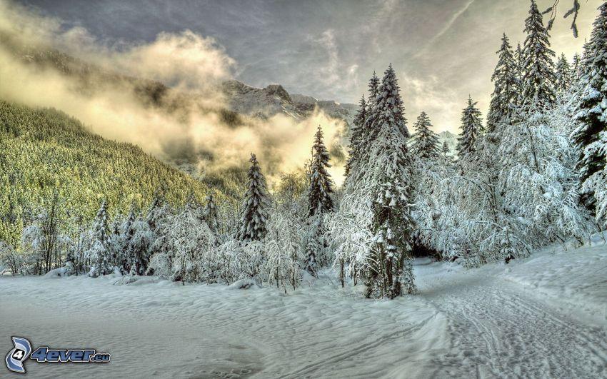 Alperna, snöklädda träd, skogsväg